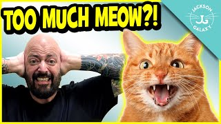 Stop The Constant Meow: 6 Reasons Why Your Cat OverVocalizes