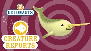 Octonauts: Creature Reports - Narwhal