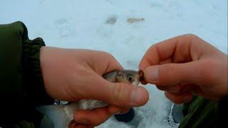 Расставили жерлицы и ловим карася Зимняя рыбалка 2021