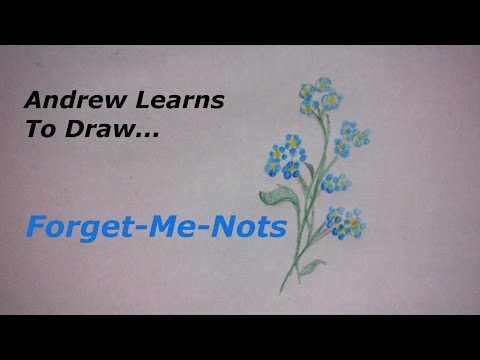 Andrew learns to draw a forget me not youtube andrew learns to draw a forget me not ccuart Image collections