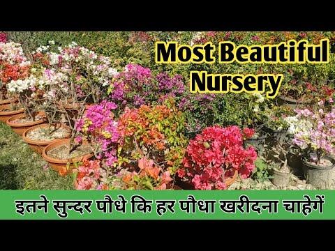 Most beautiful Nursery : Roadside Nursery