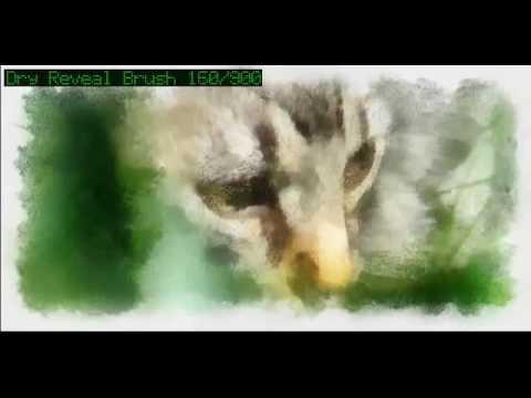 Painted Kitten music by Alex Khaskin