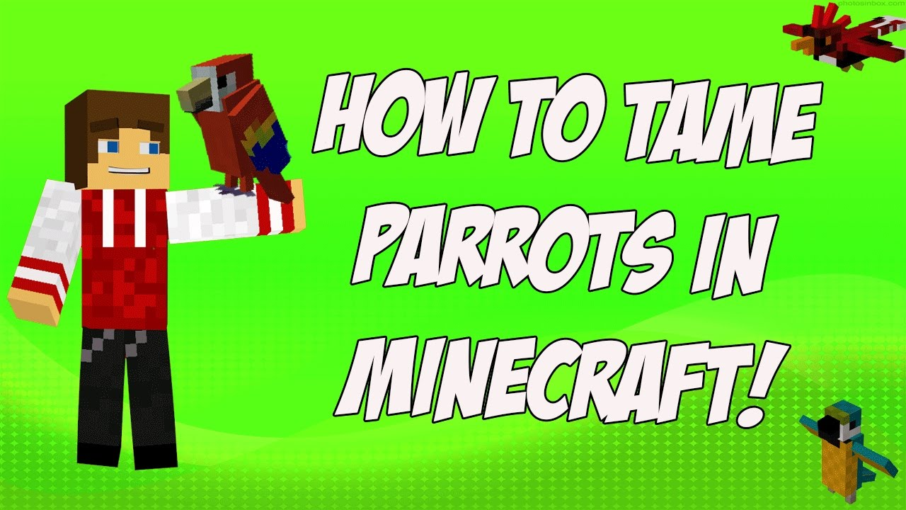 minecraft how to put a parrot on ur shoulder
