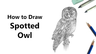 How to Draw a Spotted Owl with Pencils [Time Lapse]