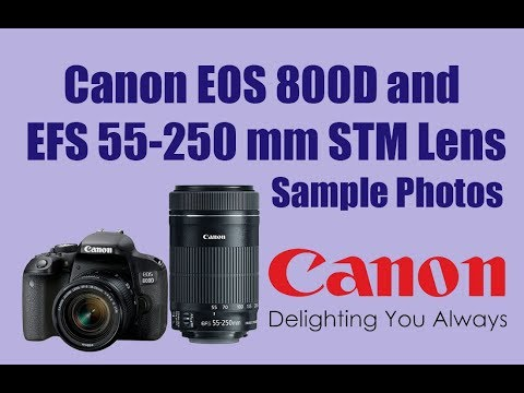 Canon EOS 800D/Canon EOS Rebel T7i and Canon EFS 55-250mm f/4-5 6 IS STM  Lens Sample photos