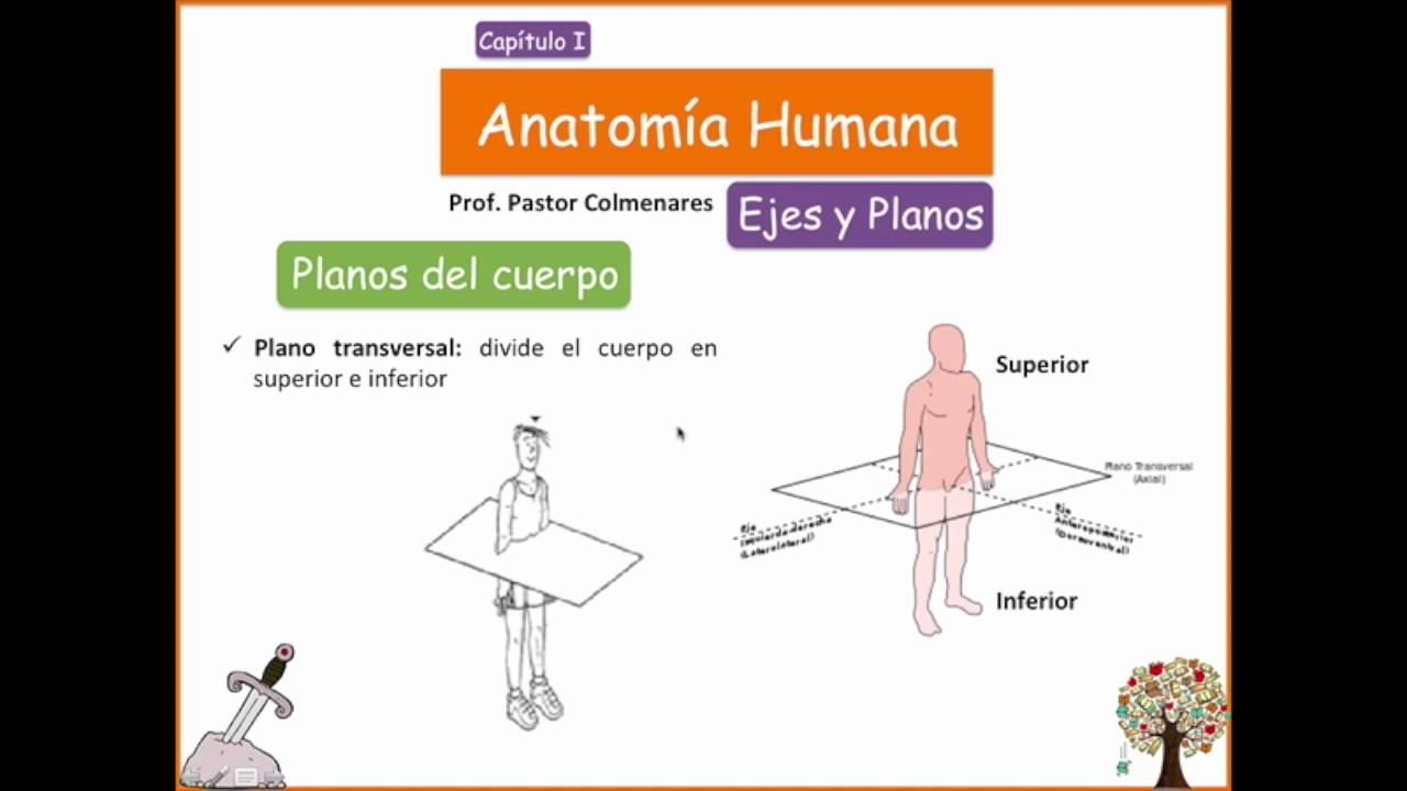 Ejes y Planos - Anatomía Humana - Capítulo I - YouTube