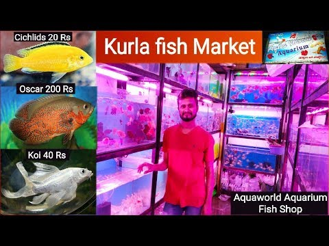 Aquaworld aquarium shop, Kurla Fish Market