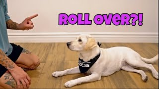 My Dog Learns To Roll Over!