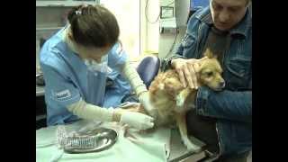 Мочекаменная болезнь у кошек и собак.
