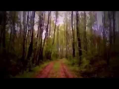 ужас заблудились в лесу