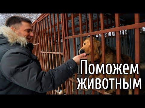 Вадим Нуждин посетил приют бездомных животных Надежда в Самаре