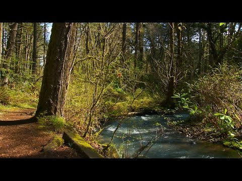 Grant's Getaways:  Forests For Families
