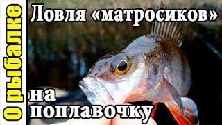 Рыбалка на поплавок,ловля окуня поздней осенью в октябре,полосатые матросики на снасть из СССР.