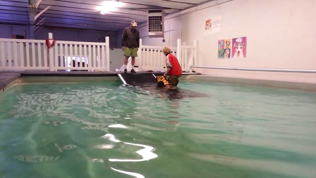 Recreational Swim For Dogs Indoor Dog Pool Www Dog