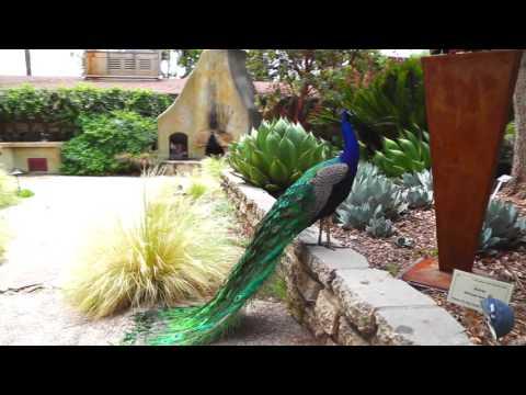 Los Angeles Arboretum & Botanic Garden