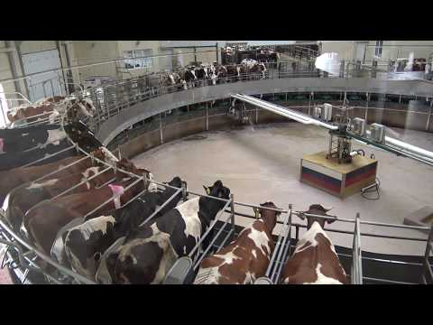 EKONIVA AGRO  Large Scale Dairy Farming in russia