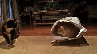 Funny Cat Showdown with a Surprise Ending