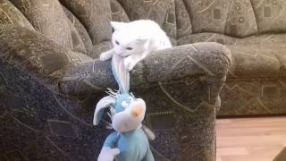FUNNY ANIMALS 😀 Funny cats Funny video Funny 2019