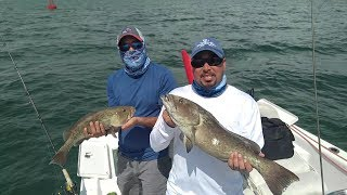 How to Find and Catch Keeper Grouper in Tampa Bay Skyway Shipping Channel