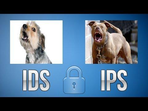 IDS e IPS (Conceitos e diferenças)