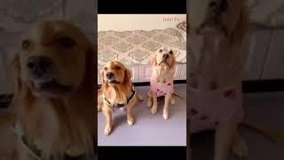 circus dog funny clip dog animal