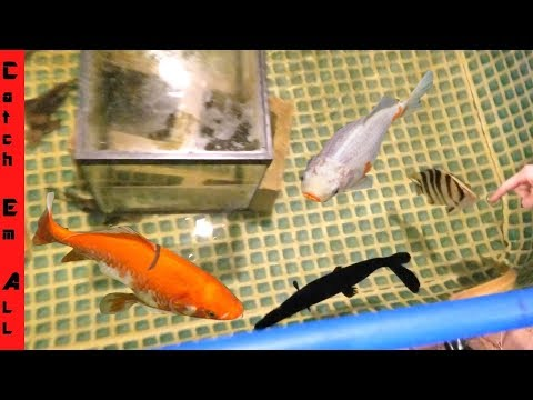 Mini POOL POND for Growing MONSTER FISH!
