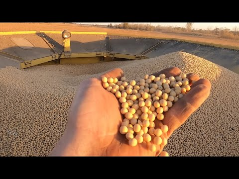 #Organic #Food #Soybeans Harvesting Food For People!