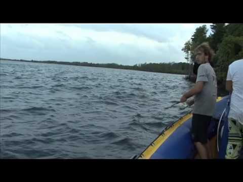 Mangrove Estuary fishing in Pomene
