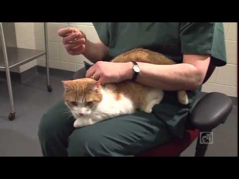 caring-for-your-diabetic-cat-part-3---how-to-give-an-insulin-injection