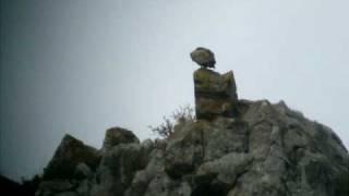 Sęp płowy Gyps fulvus