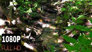Ручей в лесу, пение птиц, звуки природы, релакс, медитация, для сна, йога, спа.