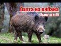 Охота на кабана, выпуск №10 (RUS)