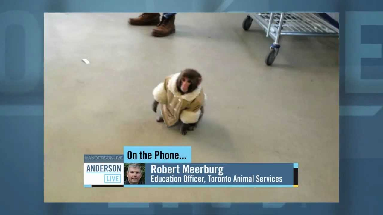 anderson gets update on ikea monkey youtube