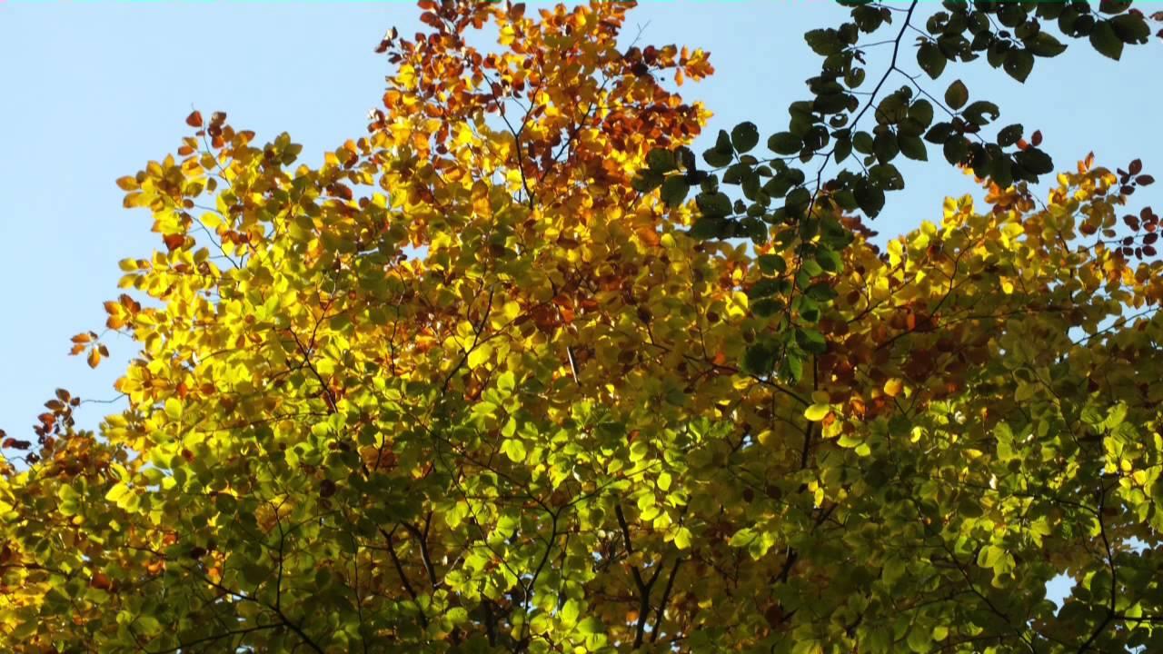 Der Herbst Steht Auf Der Leiter 4 Youtube