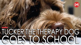 Publication Date: 2019-10-13 | Video Title: Tucker the therapy dog goes to