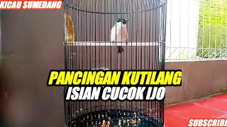 Download lagu Pancingan Burung Kutilang Gacor isian full cucok ijo MP3
