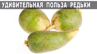 УНИКАЛЬНАЯ Польза РЕДЬКИ / ЭТО НАДО ЗНАТЬ!