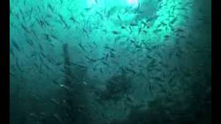 USS Strength Florida Panhandle Shipwreck Trail