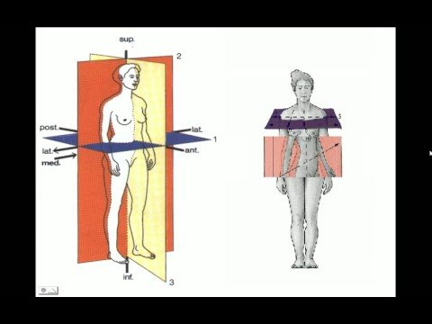 ANATOMIA ESPACIAL - YouTube
