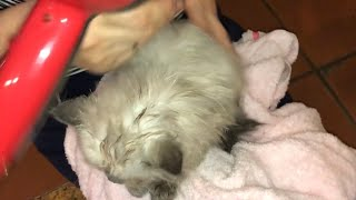 Cách chăm sóc mèo Cách tắm cho mèo để mèo đỡ cào