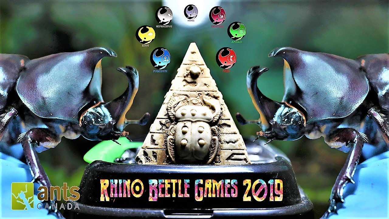 Rihno Games