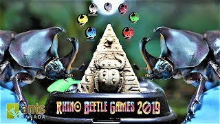 rhino-beetle-games-2019-round-one-1-beetle-eliminated