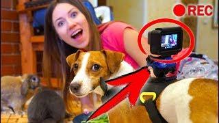 ПРИСОБАЧИЛИ Камеру НА ДЖИНУ ЧТО БУДЕТ ? СКРЫТАЯ КАМЕРА | Дом Призрак Elli Di Pets