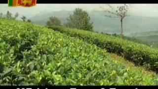 Sri Lanka, Tea Plantation -  Part 01 - By Erickson Tissera
