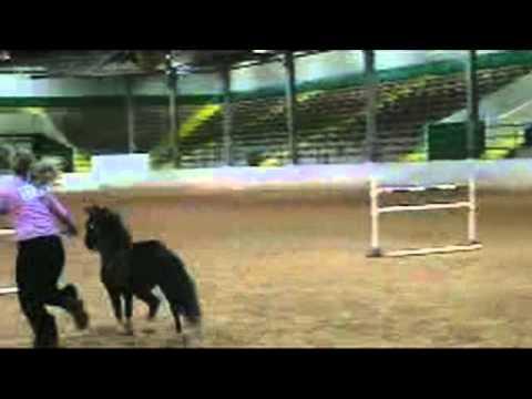 VERY SMALL HORSES