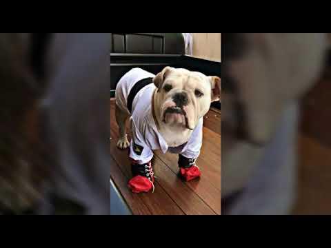 ROUPAS PET STYLE DOG