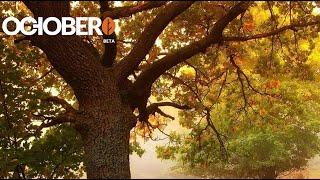 #2 October CMS - Установка