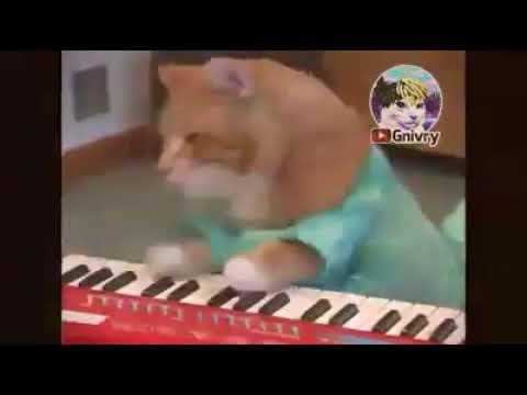 Gatos tocando tremendo rolón