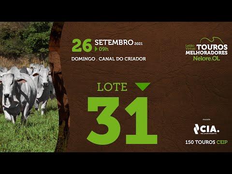 LOTE 31 - LEILÃO VIRTUAL DE TOUROS 2021 NELORE OL - CEIP