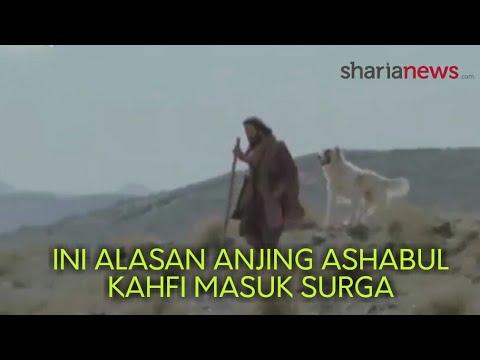 Ini Alasan Anjing Ashabul Kahfi bisa Masuk Syurga